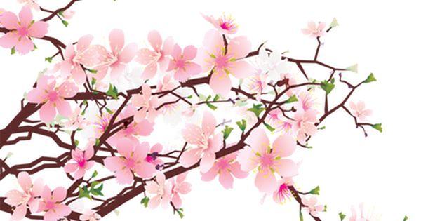 600x315 Branch Clipart Sakura