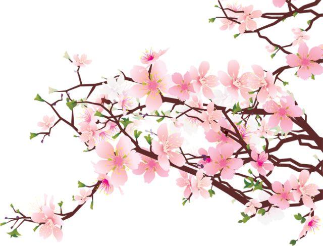640x487 16 Best Cherry Tree Art Images Cherries, Cherry