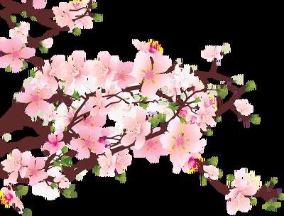 400x304 Beautiful Cherry Blossom Clipart
