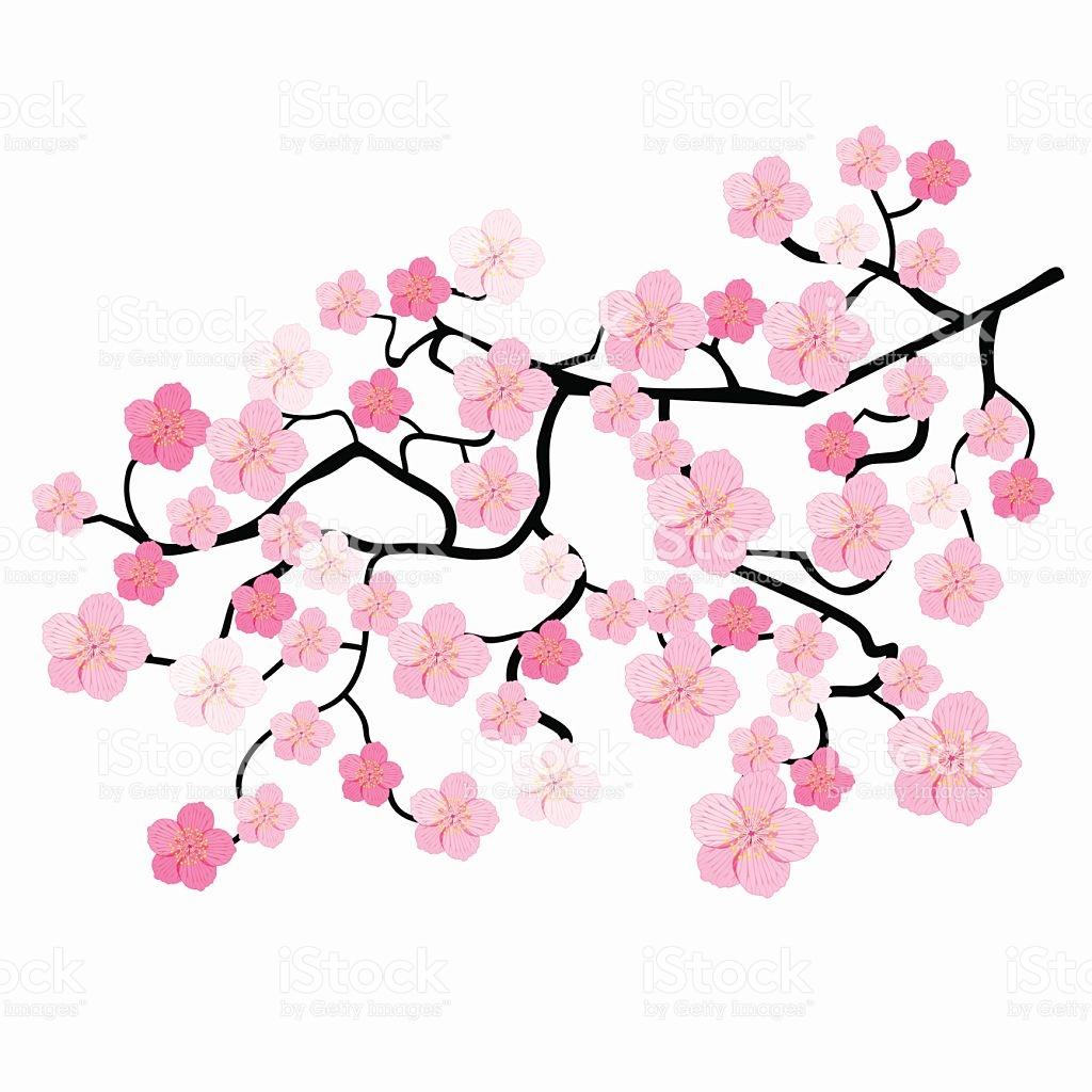 1024x1024 Cherry Blossom Clipart Illustration