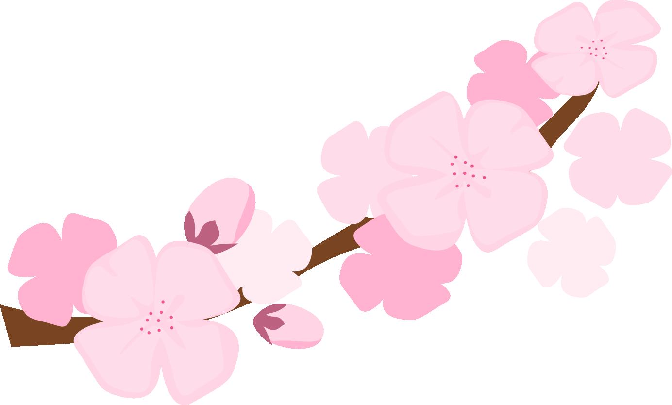 1384x834 Sakura Blossom Clipart Sakura Flower