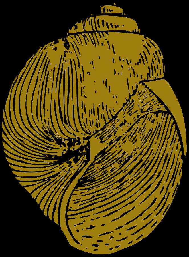 663x900 Scallop Clip Art