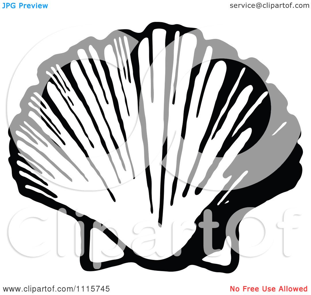 1080x1024 Clip Art Scallop Shell Clip Art