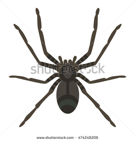 450x470 Wild Spider Clipart, Explore Pictures