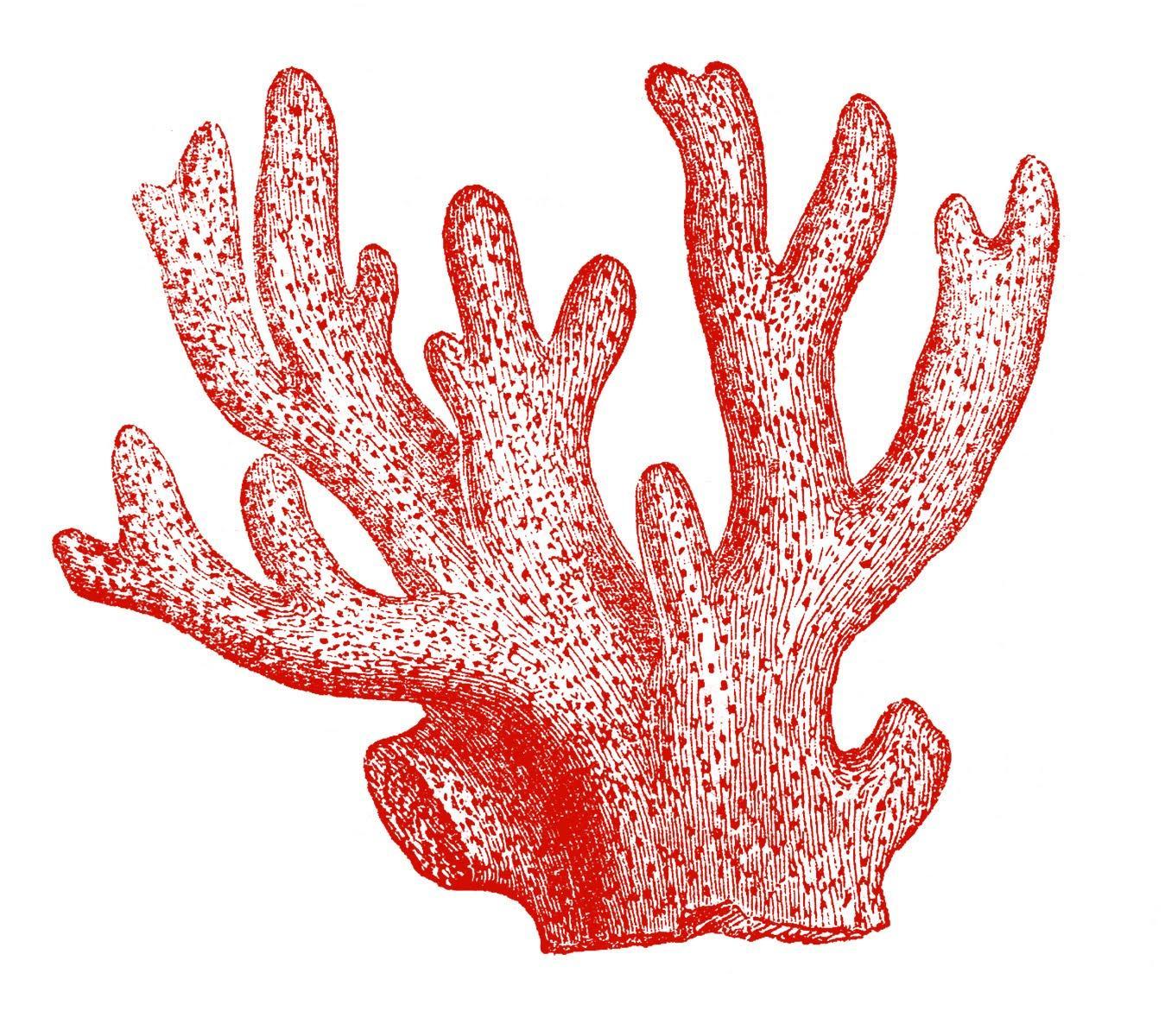 1349x1200 Sea Coral Clipart Clipartfest