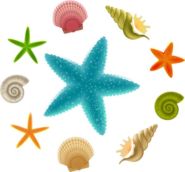 Beach seashell. Sea shells clipart free