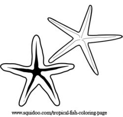 250x237 Free Printable Fish Clip Art Star Fish Or Sea Star Are Colorful
