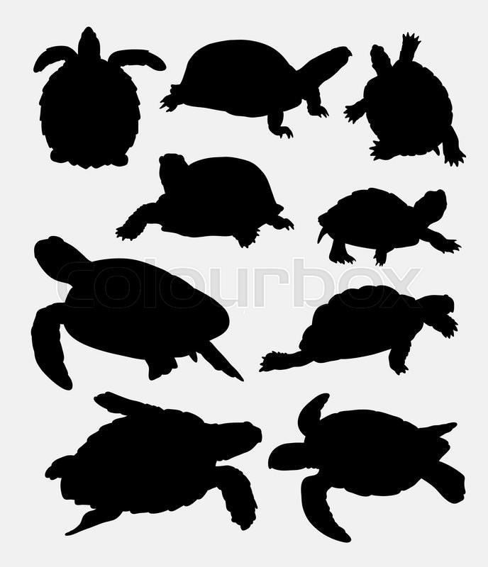 688x800 Turtle, Tortoise, Amphibian Rare Animal Silhouette. Good Use