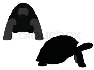 Sea Turtle Silhouettes | Free download best Sea Turtle