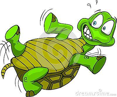 Sea Turtles Clipart