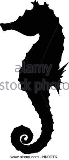 233x540 Seahorse Black Background Stock Photos Amp Seahorse Black Background