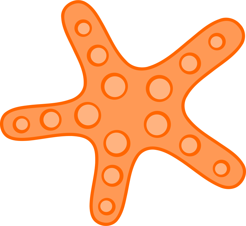 800x736 Top 83 Sea Star Clipart