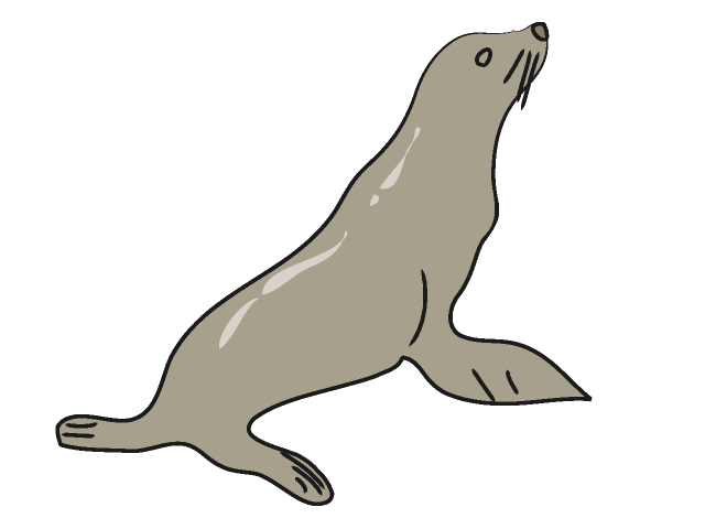640x480 Seal Clipart Sea Lion