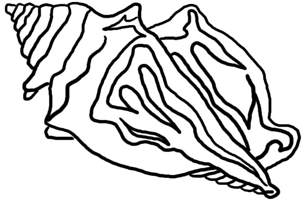 624x411 Conch Shell Clip Art Many Interesting Cliparts