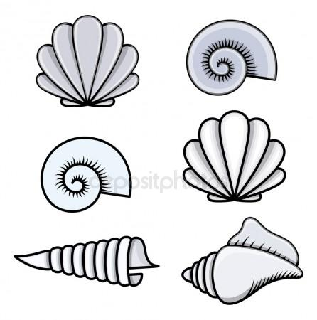 446x450 Seashell Stock Vectors, Royalty Free Seashell Illustrations