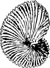 171x234 Free Seashell Clipart, 1 Page Of Public Domain Clip Art