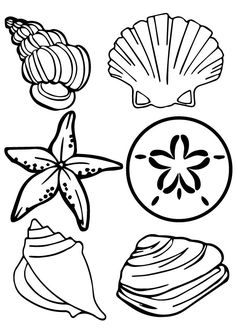 236x333 Images For Gt Simple Seashell Drawings Tattoos I Want