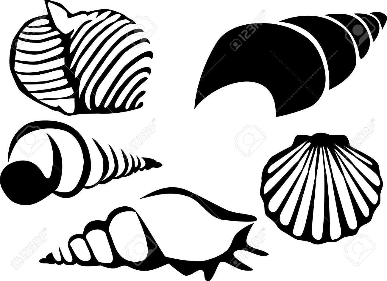 1300x945 Mollusc Clipart Seashell