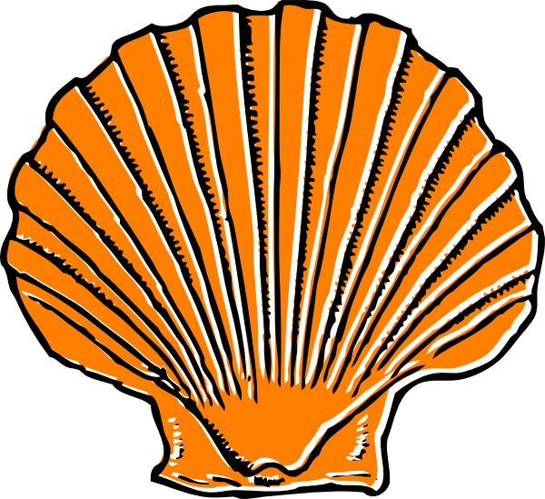 600x549 Orange Seashell Clip Art