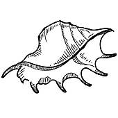 170x170 Sea Shell Clip Art