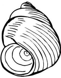 238x300 Seashell Coloring Pages Pattern