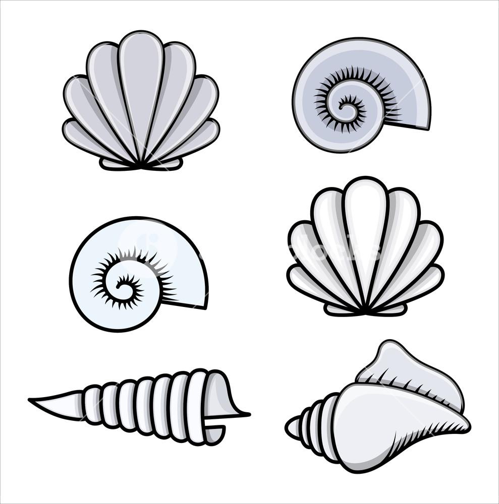 989x1000 Seashells