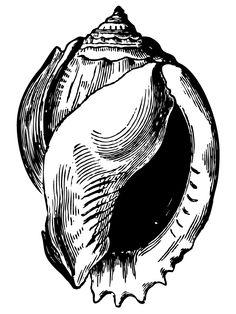 236x314 Seashells Line Drawing Download Pdf Art Amp Stuff