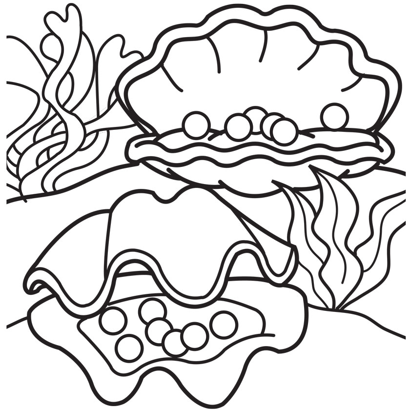 842x842 Shell Clipart Colouring Page