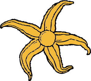 297x264 Starfish Clip Art