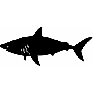 320x320 Image Of Shark Clipart 4 Happy Shark Clip Art Free Clipartoons