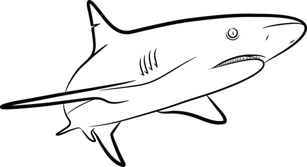 612x334 Mako Shark Clipart Black And White
