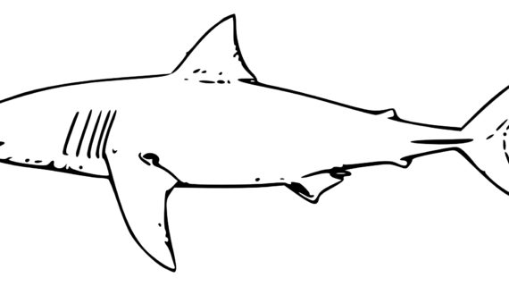 570x320 Outline Drawing Of A Shark Shark Outline Clip Art Shark Clip Art