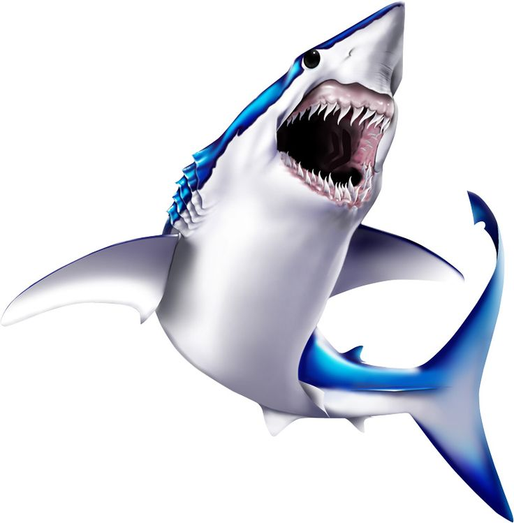 736x749 212 best SEA ANIMALS CLIP ART images Shark, Big