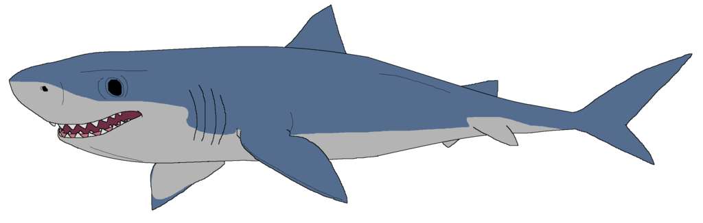 1024x326 Great White Shark Clip Art – Cliparts