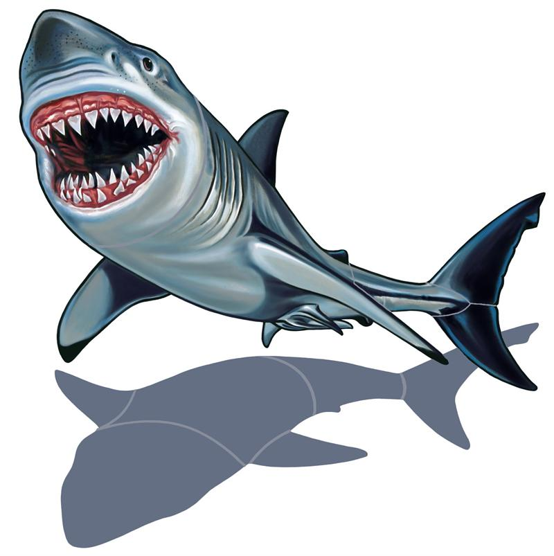 800x803 Great White Shark Clip Art Free Clipart Images