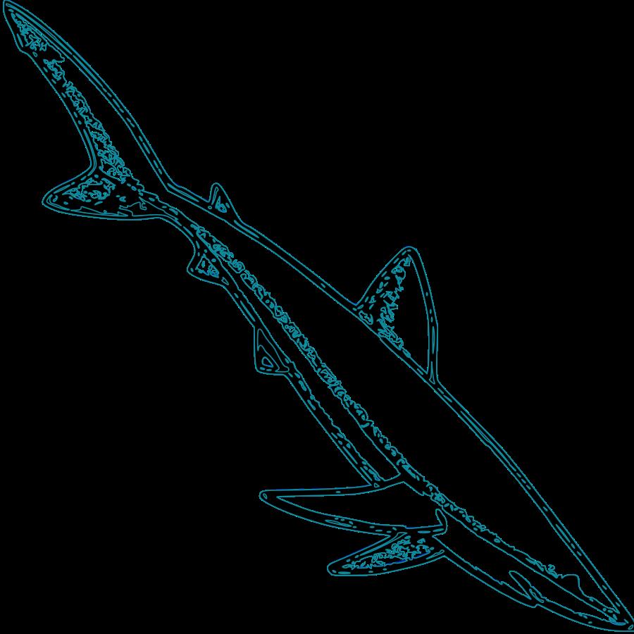 900x900 Shark Vector