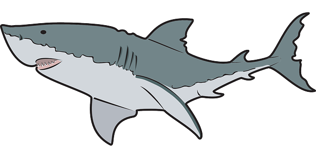 640x320 Free Great White Shark Clip Art
