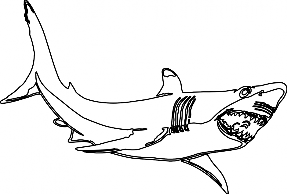 940x636 Great White Shark Clipart Drawn