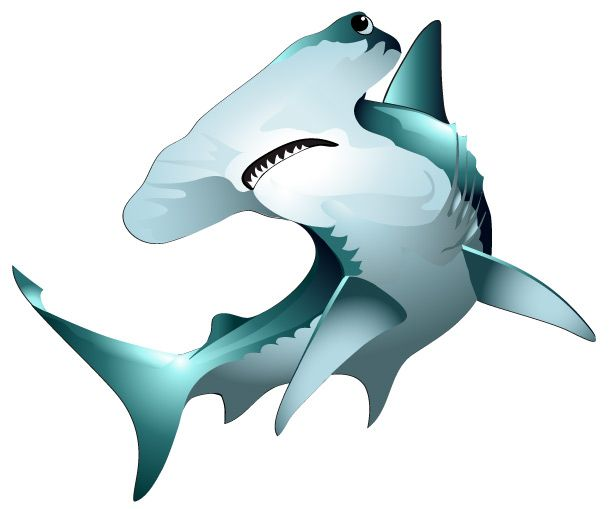 612x509 Hammerhead Shark Clipart Many Interesting Cliparts