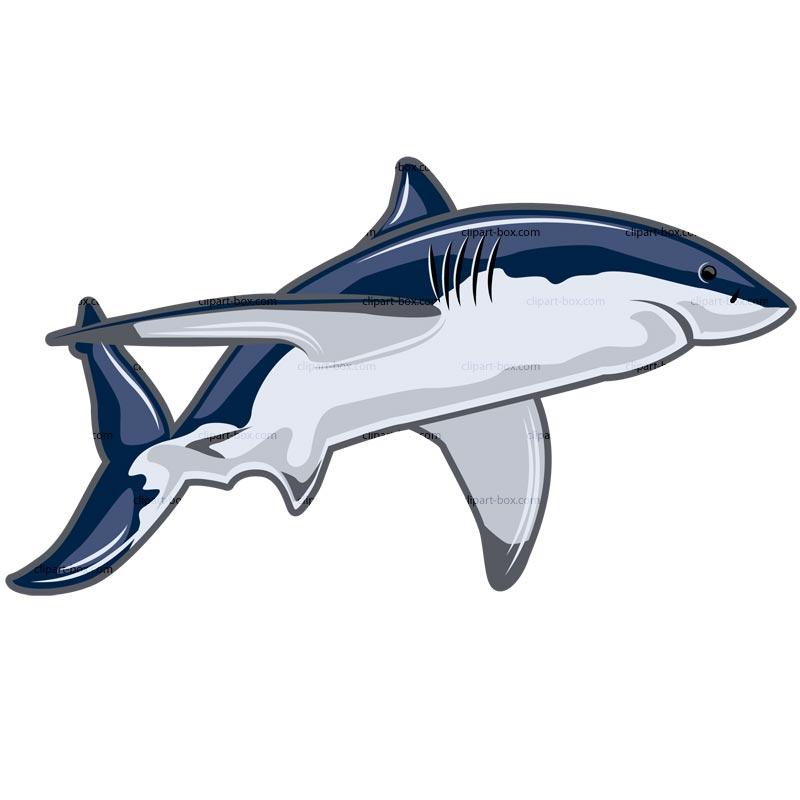 800x800 Shark Clipart Graphic