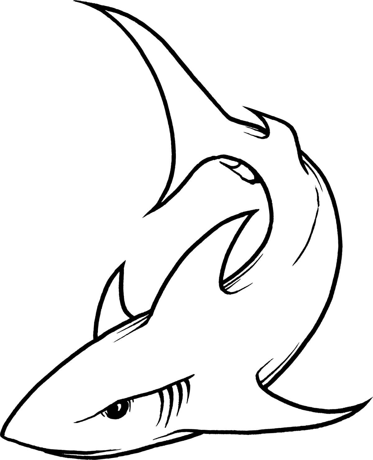 1200x1479 Shark