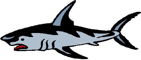 493x209 Shark Clipart Art