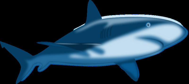 800x355 Top 88 Shark Clip Art