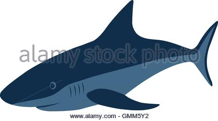 450x250 Shark. Vector Illustration Stock Vector Art Amp Illustration, Vector