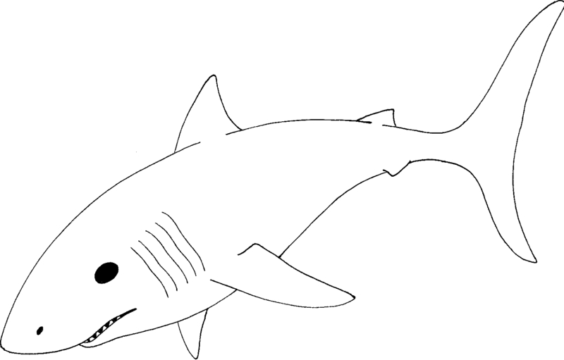 800x511 Mako Shark Clipart Black And White