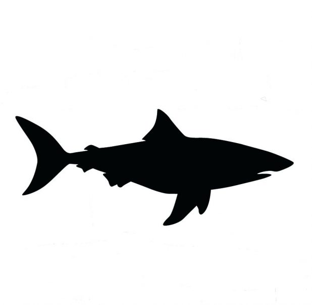 618x603 Free Cartoon Shark Outline And Silhouette 49 Marvellous Vector