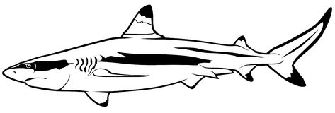 473x160 Shark Clipart Shark Outline