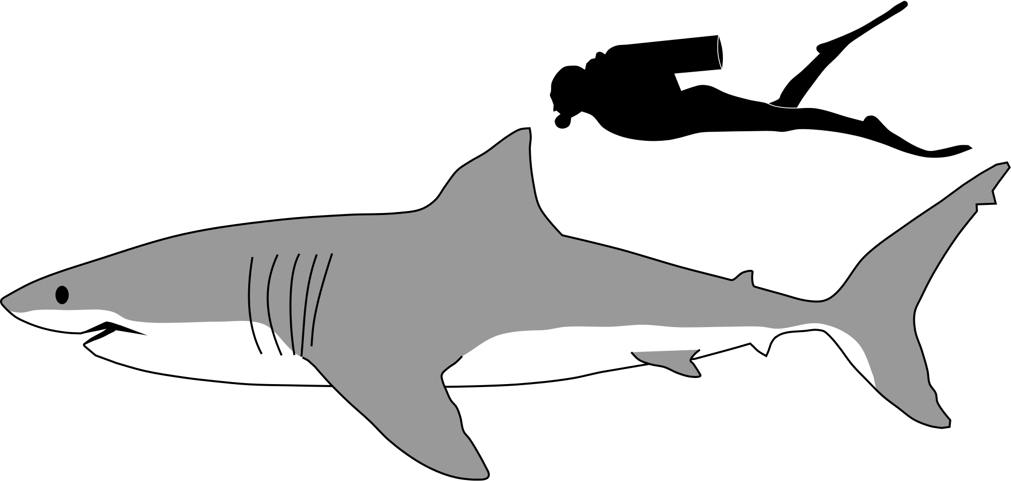 2000x953 Tiger Shark Outline Kids Coloring