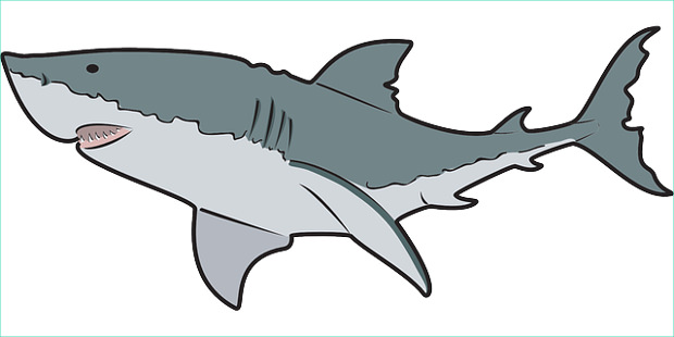 620x310 Shark Clip Art