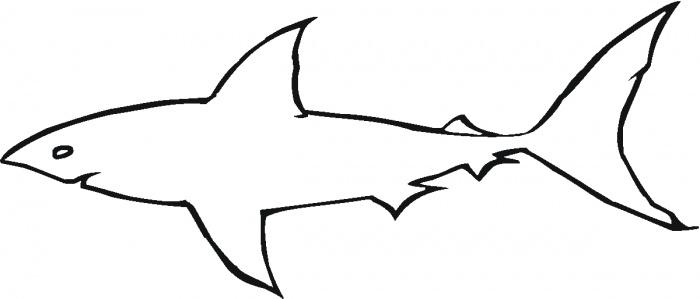 700x299 Shark Outline Clip Art Clipart